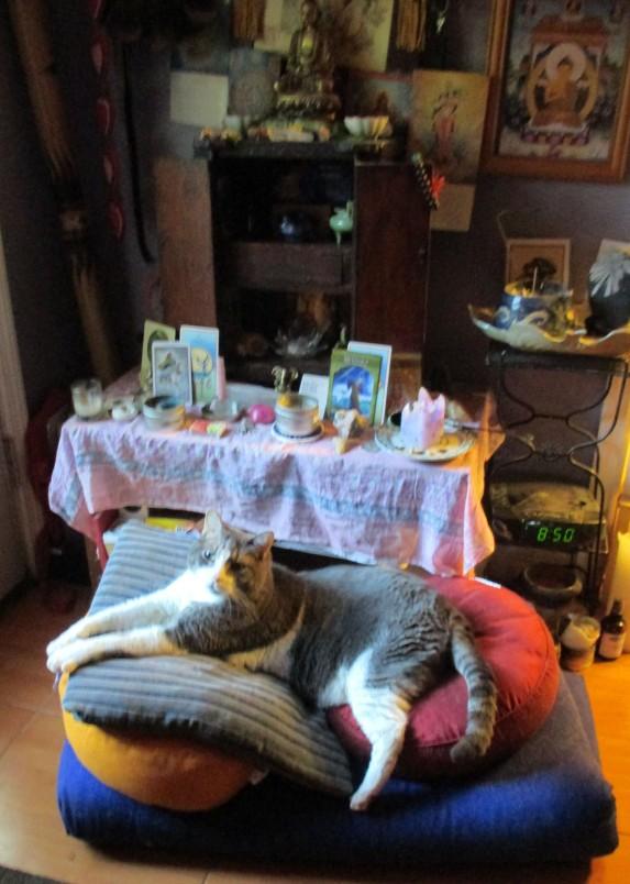 mycroft on cushion